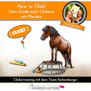 Clickern mit Pferden! So erlernst Du das Training mit positiver Verstärkung.