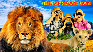 lion, lion facts, african lion, wild adventure girls, the wild adventure girls