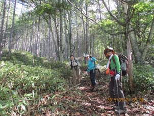 最初は緩やかに樹林帯の中を登っていきます