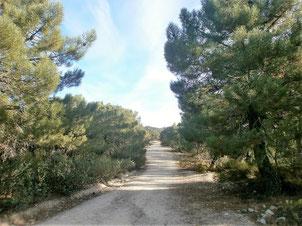 Llano de la Cuna