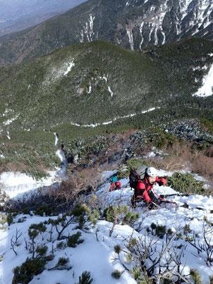 ハイマツが出たてしまった稜線を登る