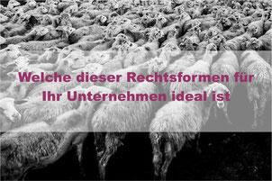 Rechtsformwahl, Einzelunternehmen, GmbH