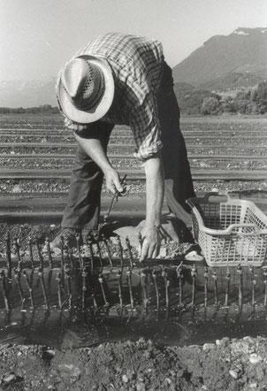 Domaine Vendange Vins de Savoie - La pépinière