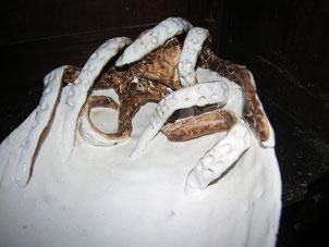 ceramica scultura polpo