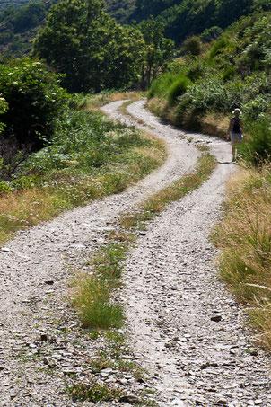 Sentier typique cévenol