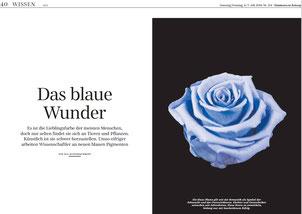 """Kai Kupferschmidt: """"Das blaue Wunder"""", SZ, 6.7.2019 (Ausschnitt)"""