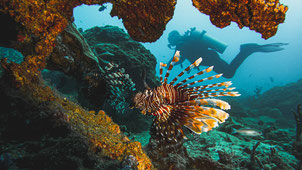 Lionfish, Pulau Weh