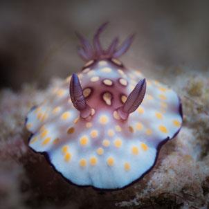 Slug, Pulau Weh