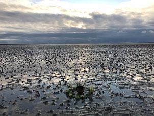 Mit Jhamala die Kraftplätze an der Westküste der Nordsee entdecken
