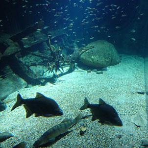 Aquarium im Ozeaneum in Stralsund