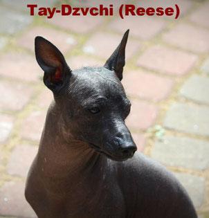Tay-Dzvchi (Magaldi) REESE
