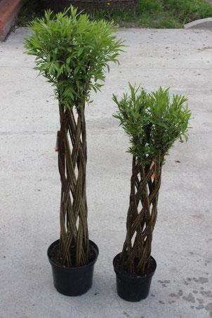 Датские корни плетеные деревья из лозы
