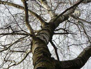 énergie des arbres, sylvothérapie, shinrin yo ku