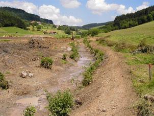 Mai 2005: Zunächst wurden die Stöcke der ursprünglichen Ufergehölze: Hasel, Schwarzerle, Esche und Bruchweide wieder eingebaut.