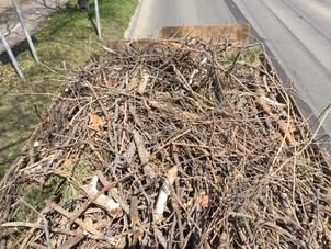 枯れ枝の撤去