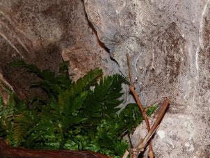 Rückwand im Terrarium *graue Felswand*