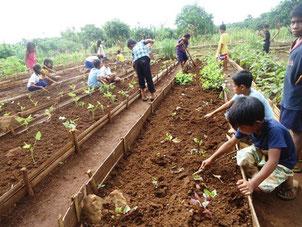 学校の畑では、グループで野菜の 管理をしています