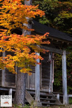 神社と紅葉