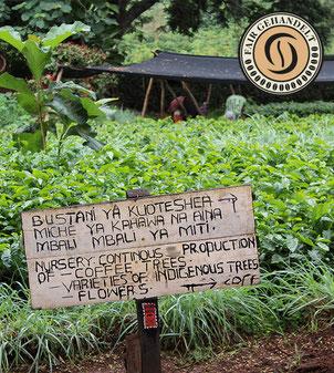Kaffeeplantage in Südamerika - Anbau zu fairen Konditionen
