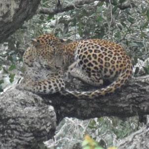Neckermann Sri lanka Rundreise Naturerlebnisse im Süden Sri Lankas bei Reiselotsen buchen