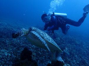 フィリピン シキホール島 ダイビング 菜ちゃんのページ