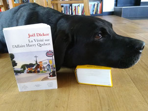 This lucky dog doesn't need dictionaries. He can communicate with any dog in any country!
