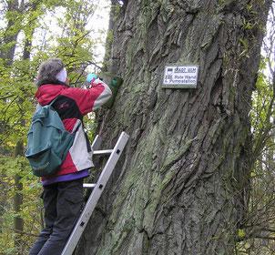 Nistkastenkontrolle im Auwald an der Iller