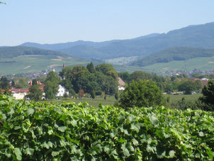 Blick über die Weinberge Richtung Schwarzwald