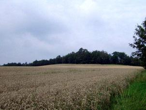 Der Krohnenberg bei Hauswalde