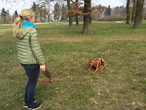 Hundeschule, Seminare, jagender Hund, Beschäftigung, Pia Gröning, positive Verstärkung, ohne Gewalt, Jagdersatztraining