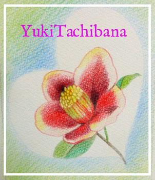 つばきの花♡