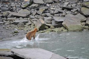 bärenbeobachtung Alaska