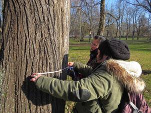 Standorte der Bäume, Baumart, Stammumfang, Höhlenanzahl, Höhlentyp und weitere Daten werden aufgenommen. Foto: Karsten Peterlein
