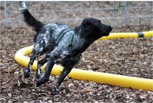 Hundeschule, Seminare, Longiertraining, Beschäftigung, Pia Gröning, positive Verstärkung, ohne Gewalt, Jagdersatztraining