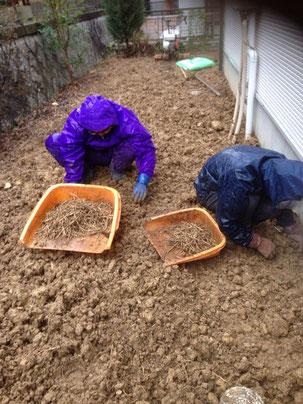 草の根っこを取り除きます
