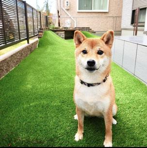 名古屋市緑区N様邸 柴犬コマリちゃんが駆け回るお庭!