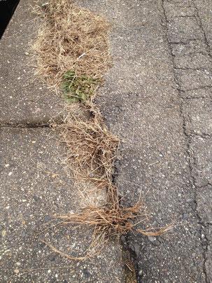 コンクリートとアスファルトの隙間から生えた雑草
