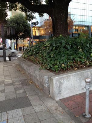 名古屋の栄で見つけた植え込み この角度だと分かりにくいが