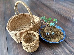 蔓細工 苔製品 室根 森林
