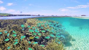 半水面撮影した宮古島の浅い海
