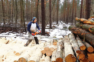 Feuerholz, Kaminholz, Stammware, Dresden, regionales Holz, nachhaltig, GMG, Janis, Andy