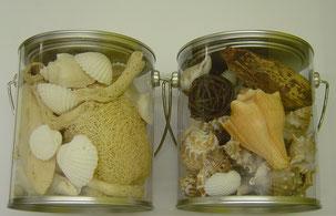 eine Box voll verschiedene Muscheln