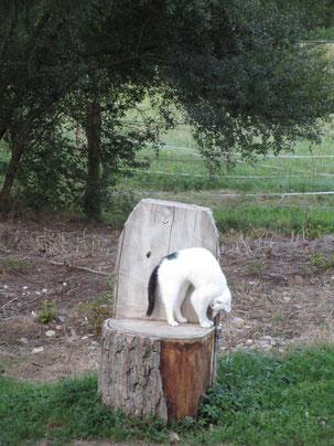 Paula - die Yoga-Katze :-) :-) :-)