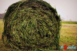 Habrá #Yerba en todo el mundo, pero en ninguno con el verde astur.