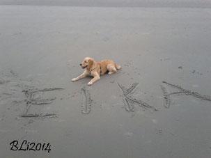 Klein Eika Grün am großen Strand