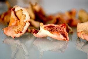 Getrocknete Pilze - Rosenseitling - Flamingoseitling