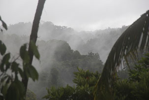 Mystik Chocó wild Pazifikküste