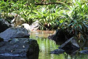 Wanderung Chocó wilde Bäche Pazifik