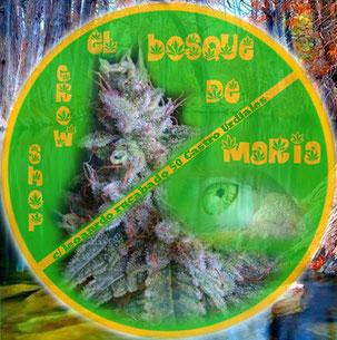comprar semillas marihuana big seeds cantabria