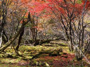 絶景!!御池の紅葉